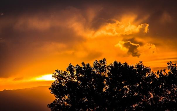 Фото обои облака, пейзаж, ветки, дерево, звкат, листья. силуэт