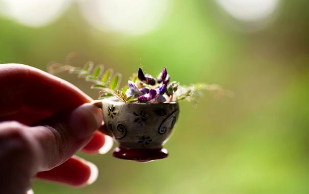 Фото обои цветок, макро, рука, кружка, пальцы