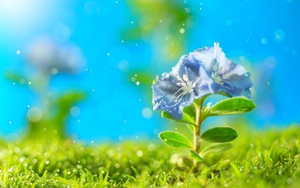 Фото обои цветок, трава, искры, петунья
