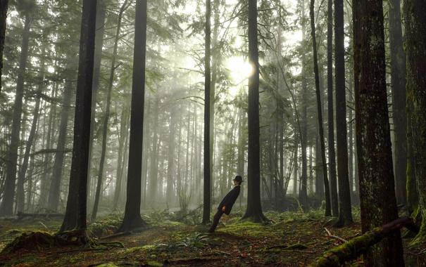 Фото обои лес, наклон, мужчина
