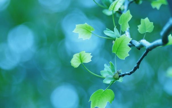 Фото обои макро, листва, ветка, весна, боке