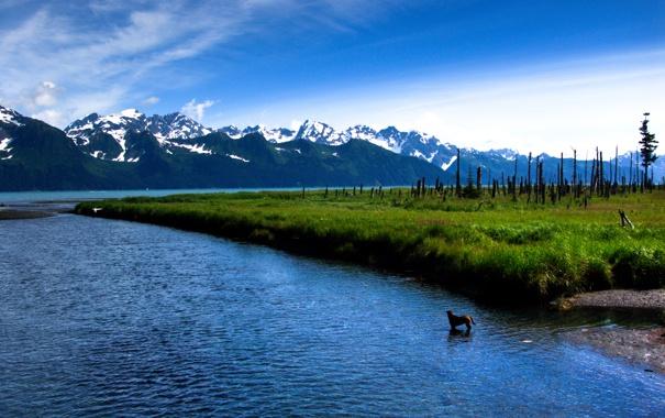 Фото обои трава, горы, озеро, Salmon Run