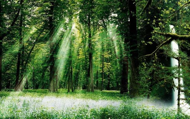 Фото обои зелень, лес, лето, трава, солнце, лучи, листва