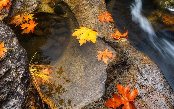 Фото обои осень, листья, вода, макро, камни