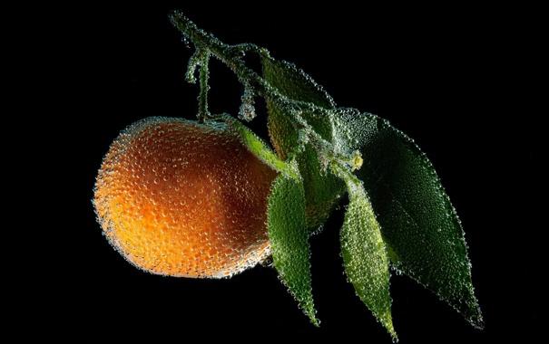 Фото обои листья, пузырьки, апельсин, ветка, черный фон, персик