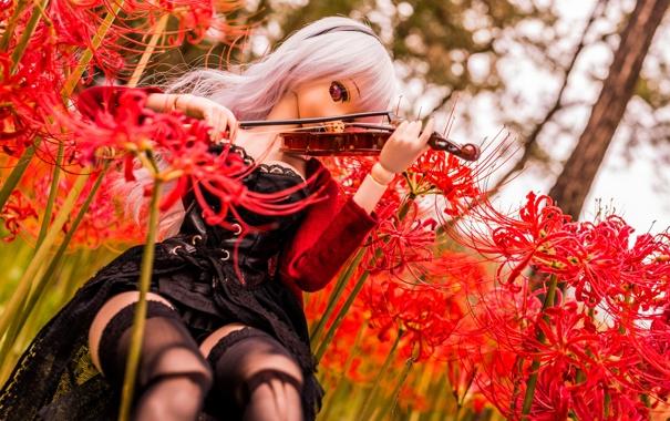 Фото обои цветы, природа, скрипка, игрушка, кукла, блондинка