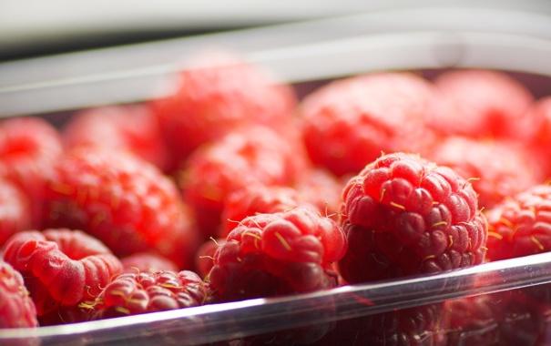 Фото обои малина, еда, ягода, красная