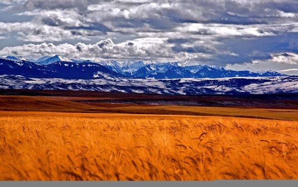 Фото обои поле, небо, облака, снег, горы, колосья