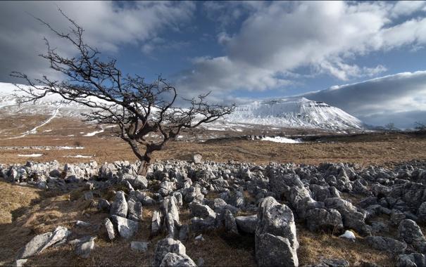 Фото обои поле, пейзаж, камни, дерево