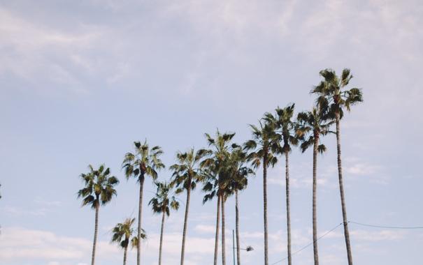 Фото обои небо, деревья, пальмы