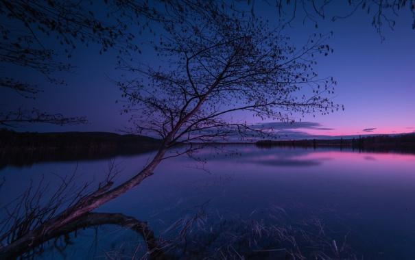 Фото обои небо, облака, ночь, озеро, дерево, зарево