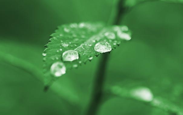 Фото обои зелень, капли, макро, лист, зеленый, дождь, green