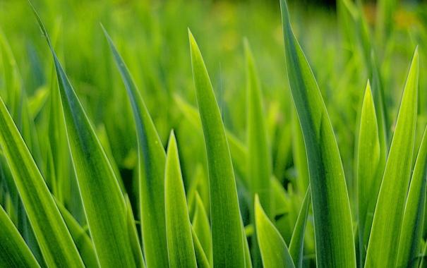 Фото обои green, grass, turf
