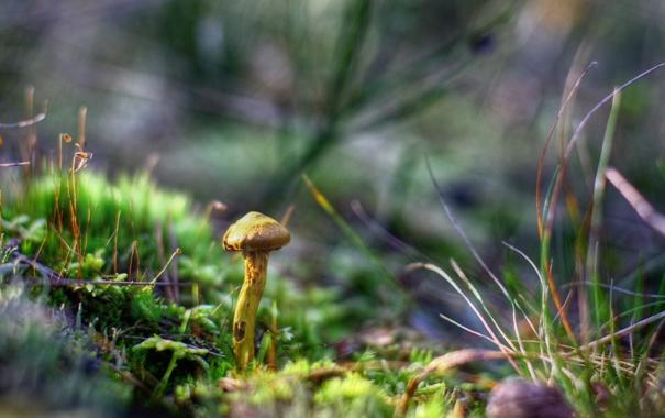Фото обои трава, макро, грибы, осенний лес
