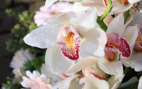 Фото обои цветы, орхидеи, цветение