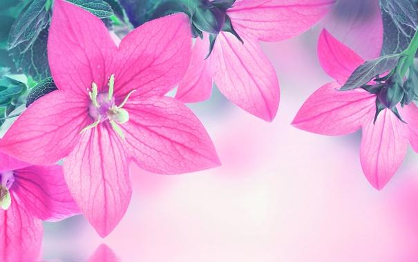 Фото обои листья, вода, отражение, лепестки, колокольчик, цветение