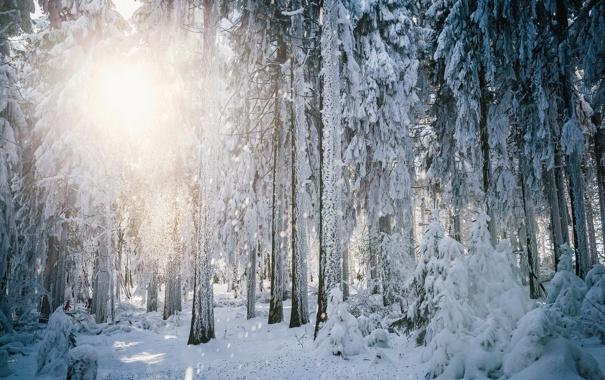 Фото обои зима, лес, снег, деревья, пейзаж, природа