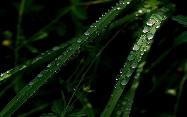 Фото обои зелень, трава, роса