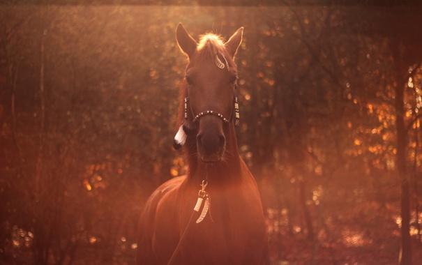 Фото обои конь, лошадь, размытие, перья