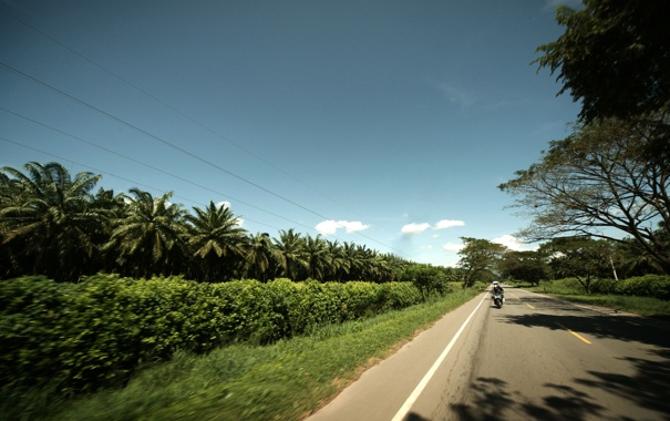 Фото обои дорога, небо, деревья, пальмы, шоссе, мотоцикл
