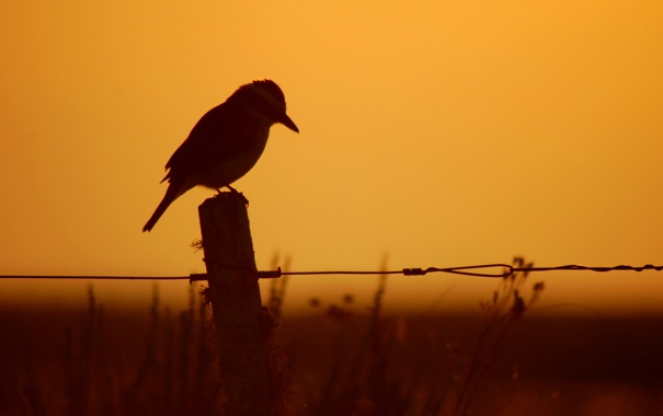 Фото обои ночь, птица, забор, силуэт