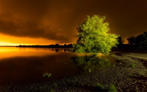 Фото обои облака, трава, небо, озеро, вечер, дерево, берег
