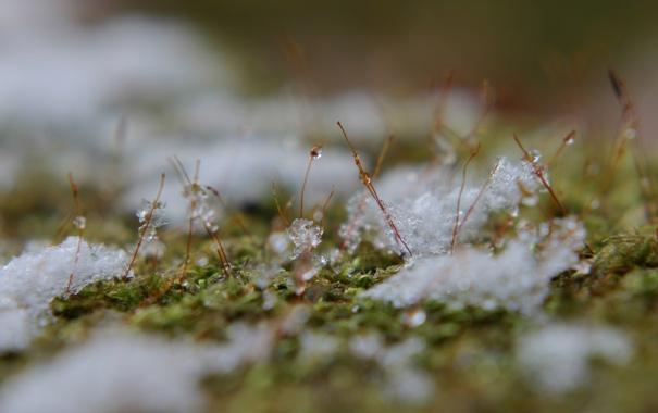 Фото обои макро, ростки, капельки, лёд, тающий