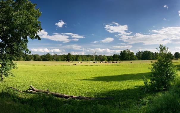 Фото обои животные, небо, трава, деревья, природа, фото, обои
