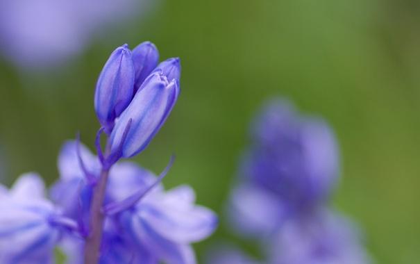 Фото обои зелень, цветок, макро, синий, природа, зеленый, растение