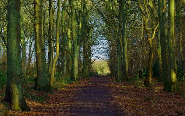 Фото обои лес, пейзаж, природа, тропа, path, woodland