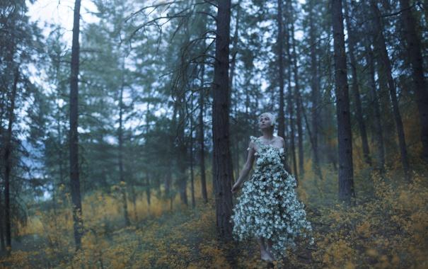Фото обои лес, девушка, ситуация