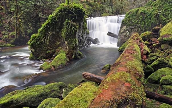 Фото обои камни, река, водопад, бревно, лес, мох