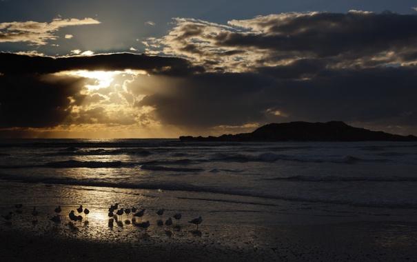 Фото обои море, пейзаж, птицы, ночь