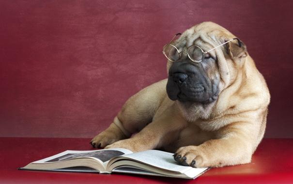 Фото обои друг, собака, очки, книга, Шарпеи