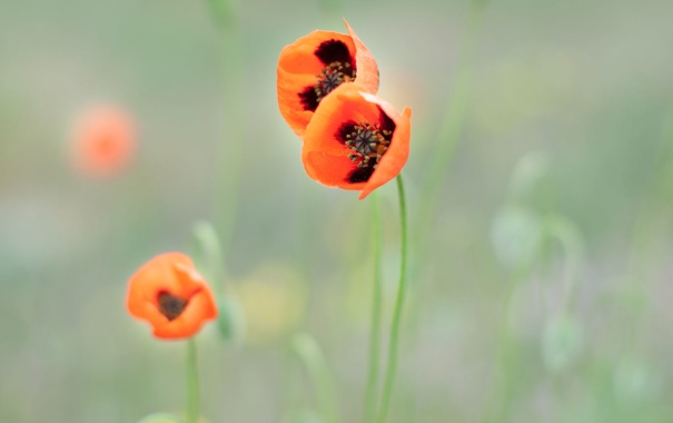 Фото обои весна, nature, wallpaper, три, природа, spring, красный