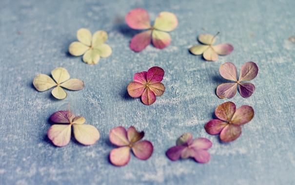 Фото обои vintage, petals, Hydrangea paniculata, A circle of nine