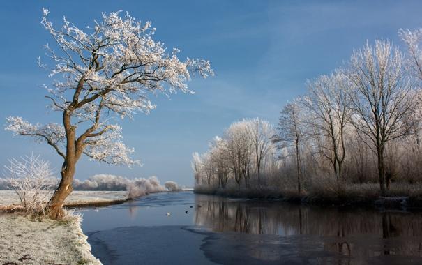 Фото обои зима, природа, река, дерево