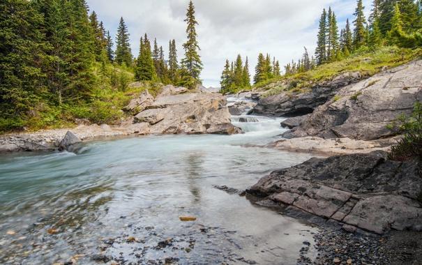 Фото обои лес, ручей, Канада, Альберта, Banff National Park, речка, Alberta