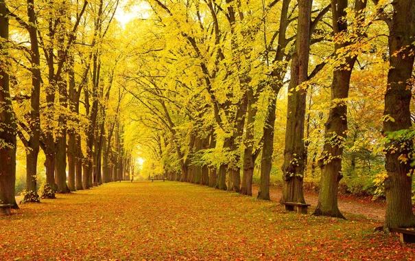 Фото обои осень, листья, деревья, парк, Германия, Бавария, аллея