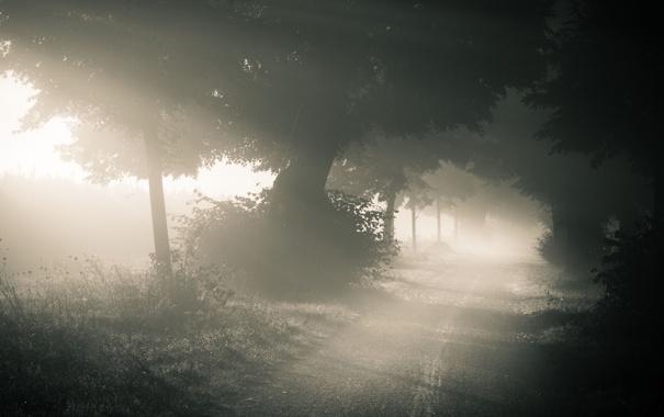 Фото обои дорога, лес, природа, туман, утро