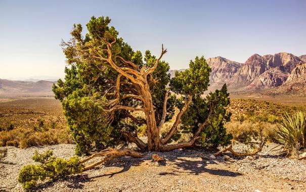 Фото обои небо, горы, камни, дерево