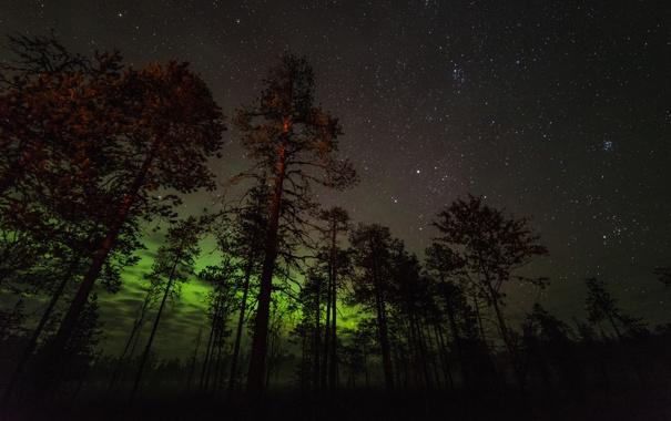 Фото обои небо, звезды, деревья, ночь, сияние