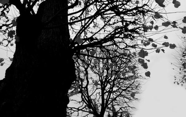 Фото обои осень, листья, ветки, дерево, холодно
