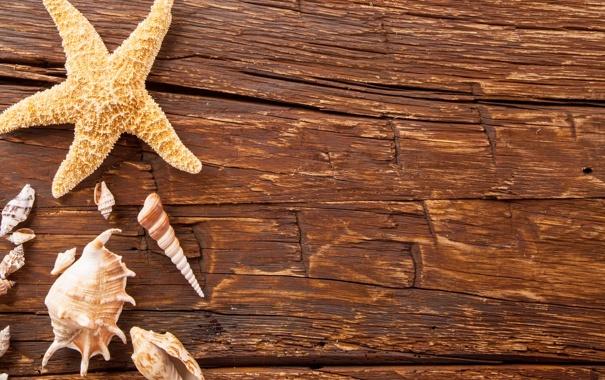 Фото обои доски, ракушки, морская звезда