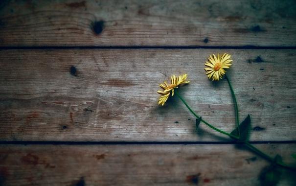 На досках цветы