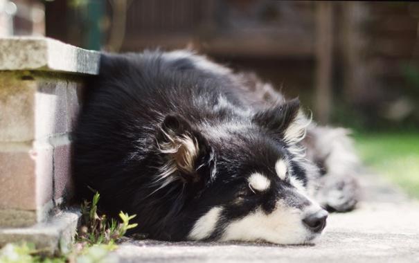 Фото обои друг, улица, собака