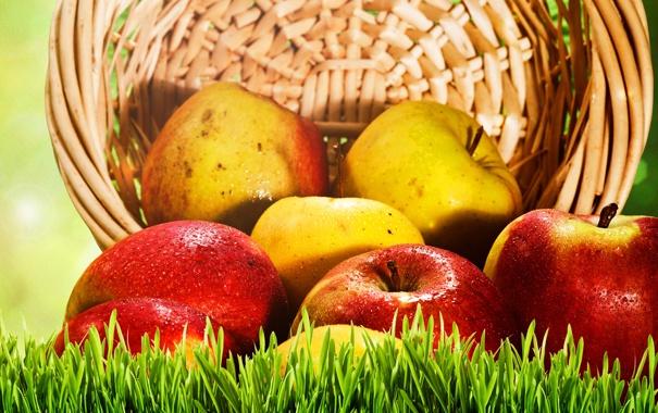 Фото обои яблоки, корзина, трава, красные, желтые, фрукты