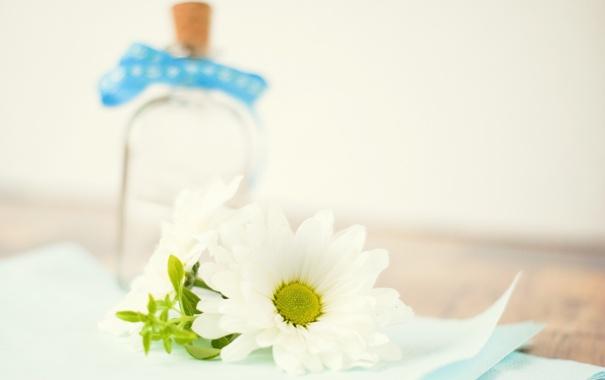 Фото обои белый, цветок, стол, бутылка, лепестки, размытость, ромашка