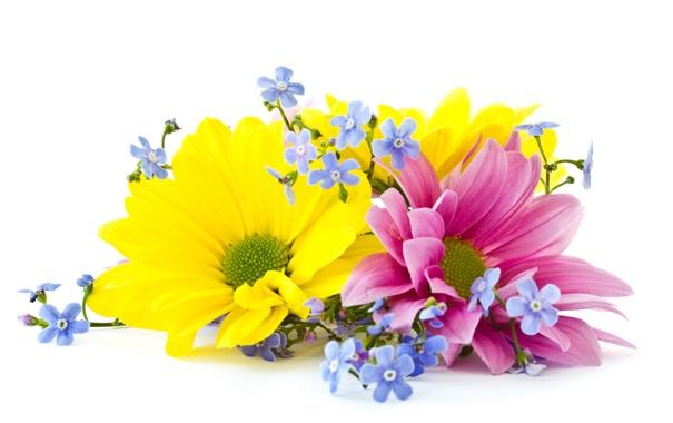 Фото обои цветы, лепестки, flowers
