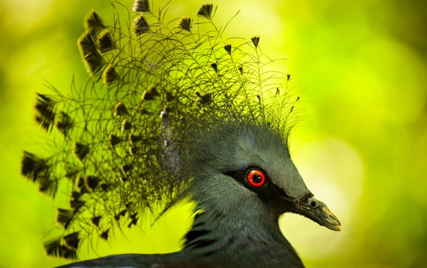 Фото обои макро, птица, перья, клюв